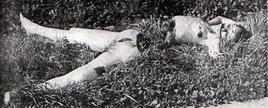 black-dahlia-murder-elizabeth-short